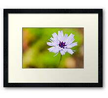 Little Flower Framed Print