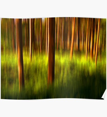 Trees in colors Poster