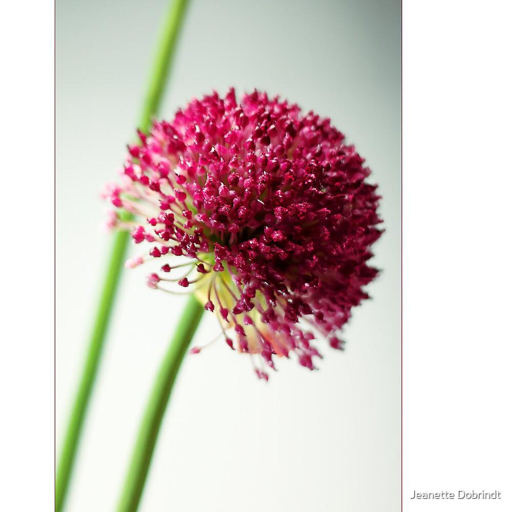 Blossom by smilyjay