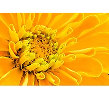 Yellow Flower Macro Photographic Print