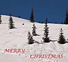 Whimsical Trees (Christmas Card) by Barb White
