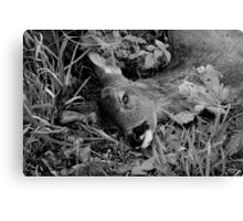 Lying By the Side of the Road Canvas Print