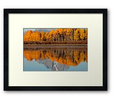 Aspen Grove Aflame At The Oxbow Framed Print
