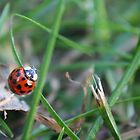 Lady Bug 3 by Cassie Jahn