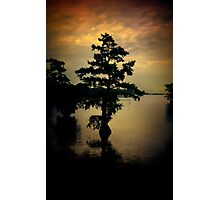 Cypress Tree Photographic Print