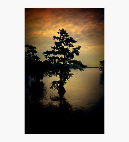 Cypress Tree Photographic Print