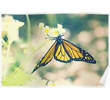 Monarch Butterfly on Daisy Poster