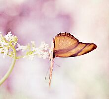 Pastel Butterfly by JRoseStudio