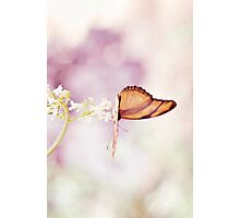 Pastel Butterfly Photographic Print