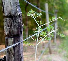 BARBED WIRE by Randi LIGHTNER