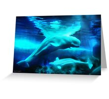 Belugas from the Arctic Greeting Card
