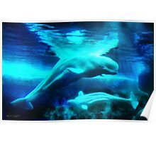 Belugas from the Arctic Poster