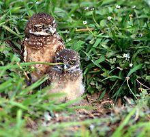 OMG! I Hate Babysitting! by Virginia N. Fred