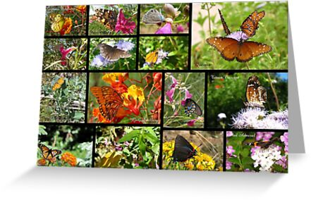 Butterflies in Arizona ~ Poster by Kimberly Chadwick