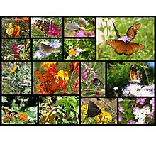 Butterflies in Arizona ~ Poster Photographic Print