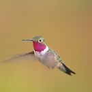 Ruby Throated Hummingbird by Rosemaree