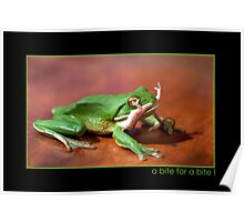 Green Frog eating Gecko,FNQ. Poster