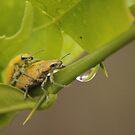 Intimate Yellow Stinky Bug by aka-sakabato
