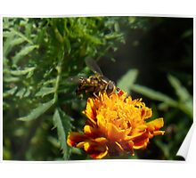Hoverfly 5 Poster