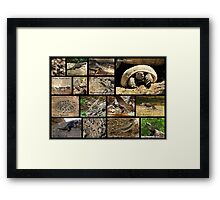 Commonly Seen Arizona Reptiles ~ Poster Framed Print