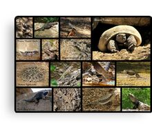 Commonly Seen Arizona Reptiles ~ Poster Canvas Print