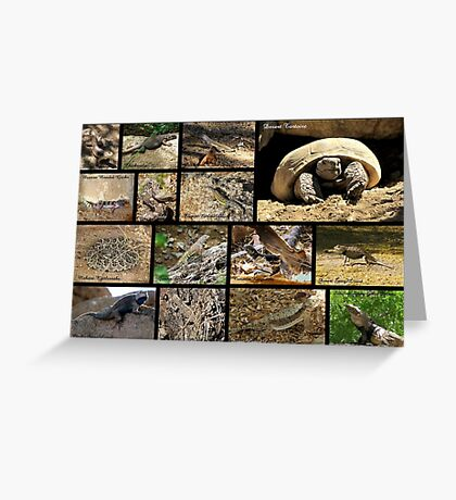 Commonly Seen Arizona Reptiles ~ Poster Greeting Card
