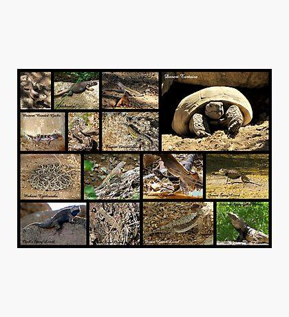 Commonly Seen Arizona Reptiles ~ Poster Photographic Print