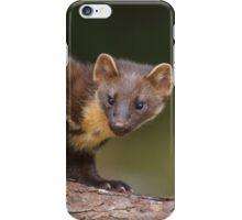 Pine marten  iPhone Case/Skin