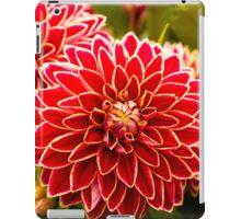 Dahlia In Bloom 11 iPad Case/Skin