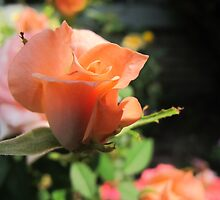 Waltzing Rose by MarianBendeth