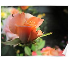 Waltzing Rose Poster