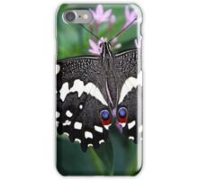 Citrus Swallowtail Butterfly iPhone Case/Skin