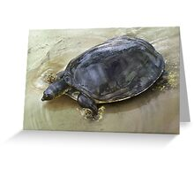SENEGAL FLAPSHELL TURTLE Cyclanorbis senegalensis CROPPED ART (NOT A PHOTOGRAPH OR PHOTOMANIPULATION) Greeting Card