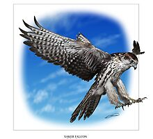 SAKER FALCON Falco cherrug (NOT A PHOTOGRAPH OR PHOTOMANIPULATION) by DilettantO