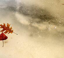 Frozen Under the Spring Ice by montserrat