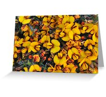 eutaxia microphylla Greeting Card