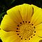 *Yellow/Avatar - Enchanted Flowers*