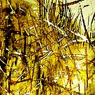 dried golden grass.....city fields by banrai
