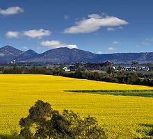 Canola Fields -  Lara, Geelong  by peterperfect