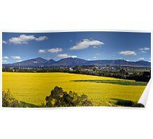 Canola Fields -  Lara, Geelong  Poster