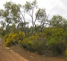 Circuit road to see the wildflowers, Miles,Qld. by Marilyn Baldey