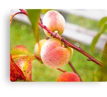 Peach Tree Canvas Print