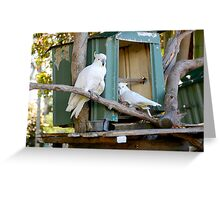 Cockatoos Greeting Card