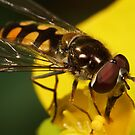 Hoverfly on yellow flower III by Andrew Widdowson