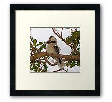 Kookaburra Tree 2 Framed Print