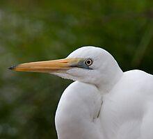 Egret by SusanAdey