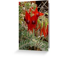 Sturt's Dersert pea Greeting Card