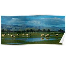"""grazing""   canterbury, south island, nz Poster"
