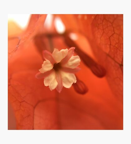 Rustic Floral Under the Scope Photographic Print