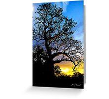 Boab Tree, Derby Greeting Card